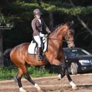 Lief recreatie/dressuur paard te koop