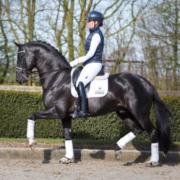 Talentvol paard ter lease aangeboden / bijrijder gezocht