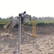 GEZOCHT Bijrijdpaard (eventueel ook op wedstrijd) ~ Someren