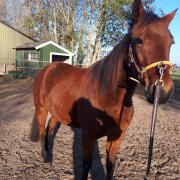 Geweldig lief project paardje