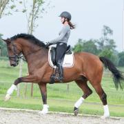 Trainings paard gezocht / amazone aangeboden