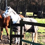 Mooie E pony