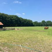 24/7 weidegang-schuilstal in Doorn/Utrechtse Heuvelrug