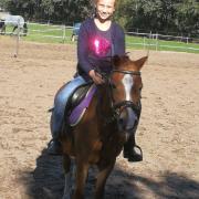 Betrouwbare Welsh pony
