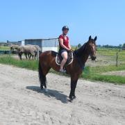Paardenhouderij stagiair gezocht voor project met dravers