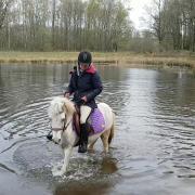 Lieve appaloosa pony met 2 maanogen