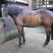 Wie kan mijn paard scheren.. [machine aanwezig]