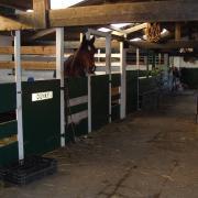 TE HUUR: ruime stal met weidegang, eigen paddock en rijbak