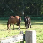 Gezocht: (prive)pensionstal voor 2 lieve paarden