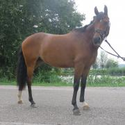 Lieve D-pony