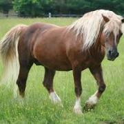 Gezocht: vriendelijke allround D-pony (of kleine E)