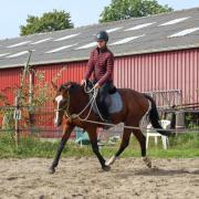 Leuke E pony