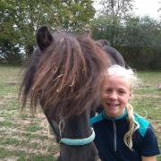 Verzorgpony/paard gezocht omgeving Oosteind, Rijen, O'hout