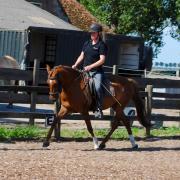 Instructeursopleiding Natural Horsemanship
