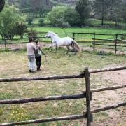 Verzorgster aangeboden met interesse in Natural Horsemanship