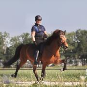 Instructie/Training/Ritten met IJslandse Paarden!