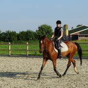 Bijrijdpaard/pony gezocht omgeving Nijkerk, Nijkerkerveen