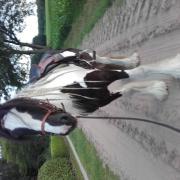 Paardenmens gezocht voor (h)eerlijk paard