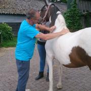 Erwins Paarden Service