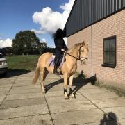 Super brave D pony!!