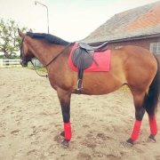 Rode set ~ QHP pad maat full + 4 bandages