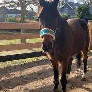 Lief 11-jarig paard