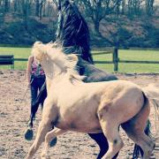 Natuurlijk grondwerk les met je paard
