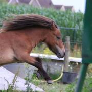Mini paardje