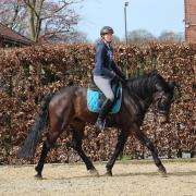 bijrijdpaard/dressuur gezocht regio Utrecht/Gorinchem/Breda