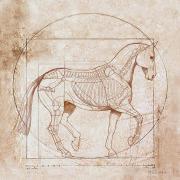 Paardenfysiotherapie