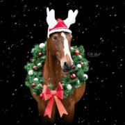 Kerst fotoshoot !LAATSTE PLEKKEN!