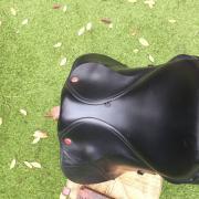 Kent & Masters veelzijdigheid/springzadel 16,5 inch