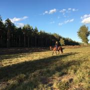 Weidemaatje/Wandelpaard aangeboden