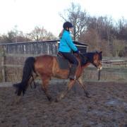 bijrijder verzorger paard pony