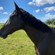 Lieve 19 jarige E-pony mei zoekt nieuw thuis