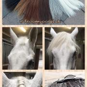 Win een #droomvoorpluk voor je paard