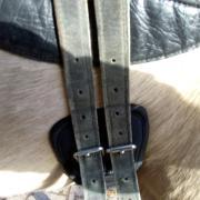 Barefoot Cheyenne maat 1 zwart drytex