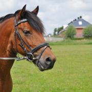 nieuw huisje voor lieve d-pony gezocht