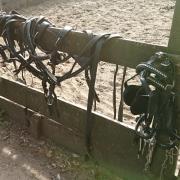 Tweespantuig Pony