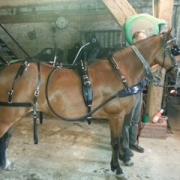 Paul Claessen enkelspan pony tuig