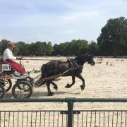 Groom / verzorger gezocht omgeving Klarenbeek