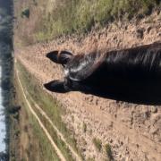 GEZOCHT Stalling voor paard en pony