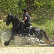Gezocht bijrijdster voor mijn knappe paard
