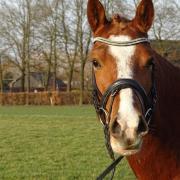 Mega knappe en brave D pony met potentie