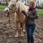 Paardrijles en grondwerk les aangeboden