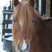 Lieve B-pony aangeboden voor bruikleen