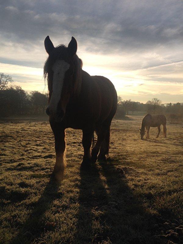 Het paarden aan huis tips topic deel 4 for Paard aan huis te koop