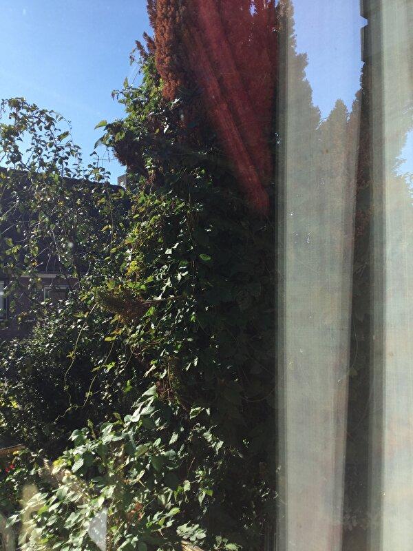 Bomen Op Erfgrens.Boom Op 7 Meter Van Erfgrens Buren Klagen Bokt Nl