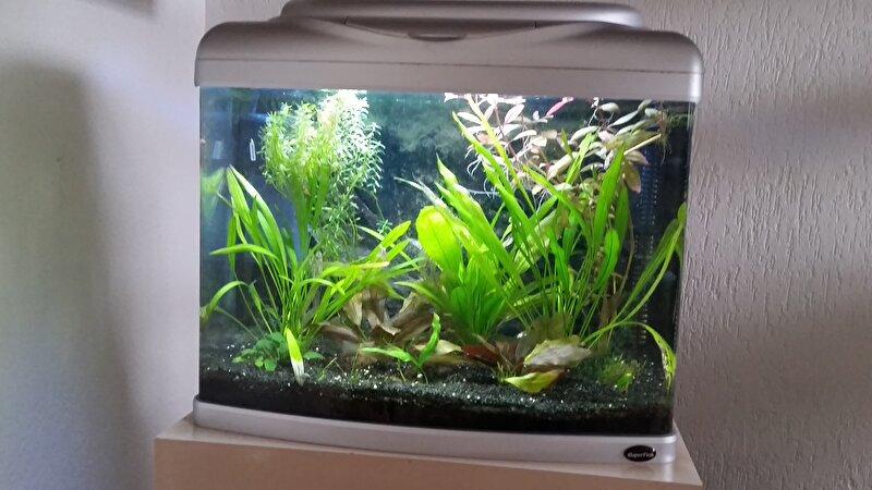 Show je aquarium!  u2022 Bokt nl