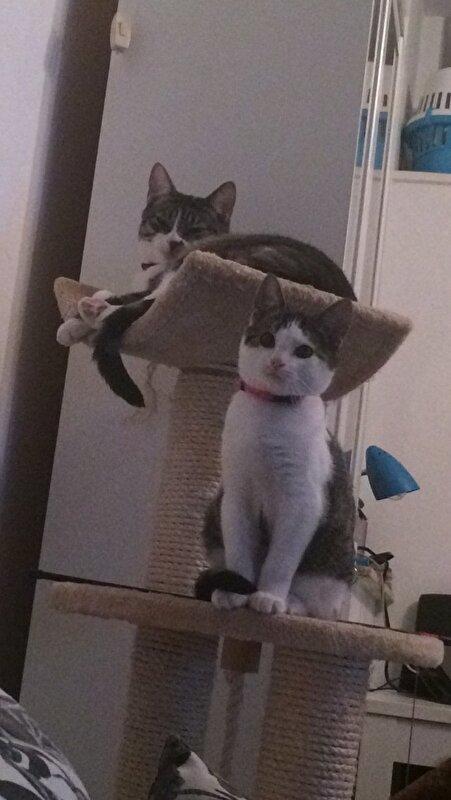 Kittenkletstopic! • Bokt.nl